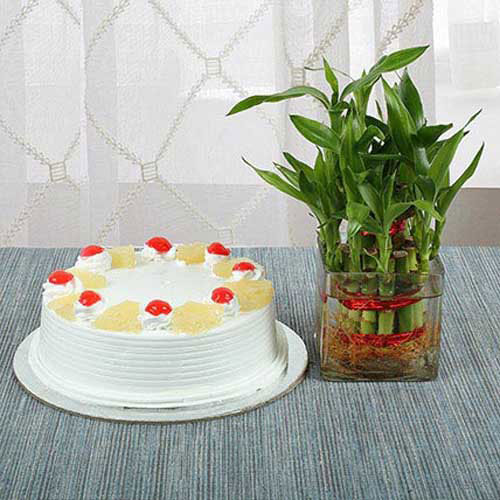 Send Gifts To India - Cake N Lucky Bamboo