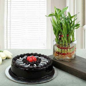 Truffle Cake N Lucky Bamboo - Same Day Delivery Gifts