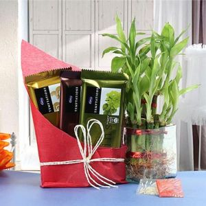 PROSPEROUS BAMBOO - Gifts for Son
