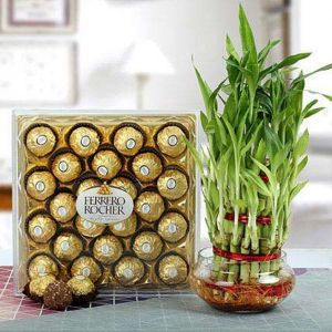 FERRERO ROCHER WITH THREE LAYER BAMBOO PLANT - Gifts for Son