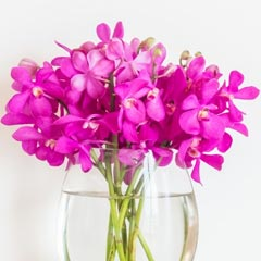 Orchids delivery online