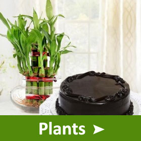 Fathers Day Plants Online